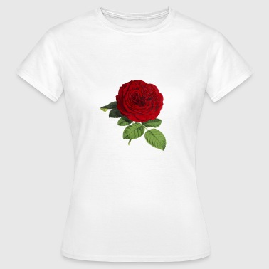 rose - Women's T-Shirt