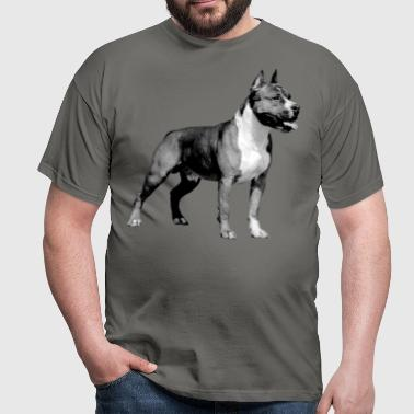 American Staffordshire Terrier -  - Men's T-Shirt