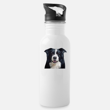 Border Border Collie - Bidon