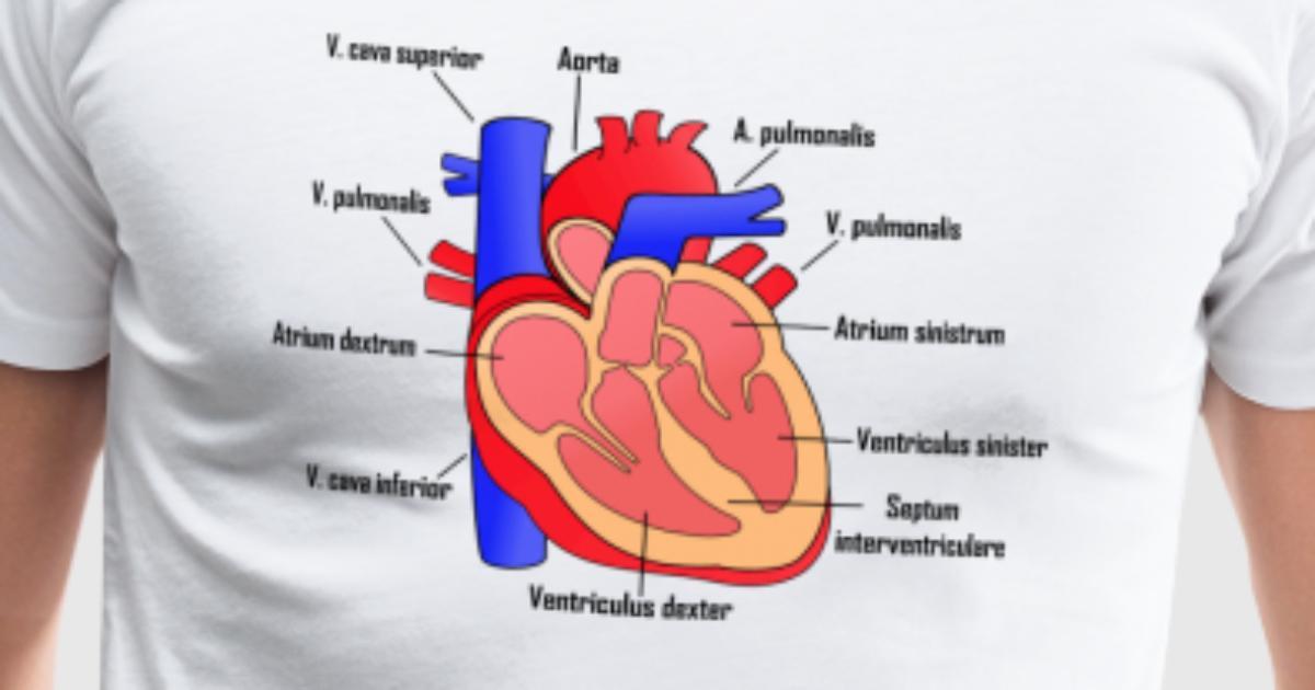 Corazón humano anatómico con letras por | Spreadshirt