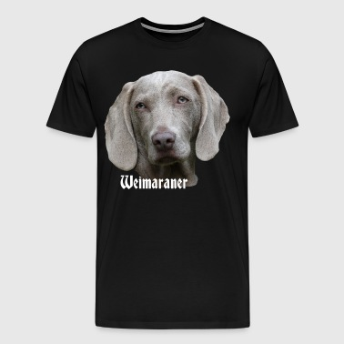 Weimaraner, dog head, dog face, dog, dog - Men's Premium T-Shirt