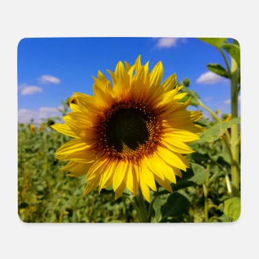 Sunflower field with sunflowers & blue sky - Mouse Pad
