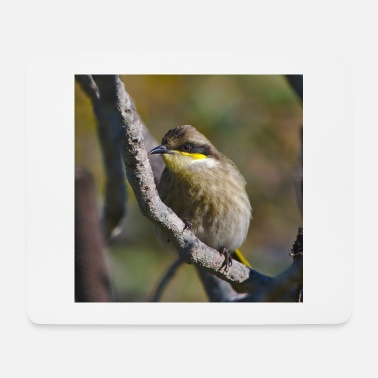 A singing honey eater - square - Mouse Pad