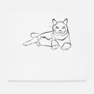Kitten Harness Training