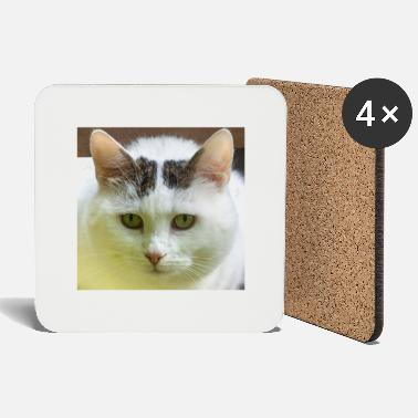 Domestic Cat Face of a white domestic cat - Coasters