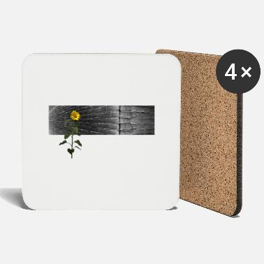 Walls Fell wallflower - Coasters