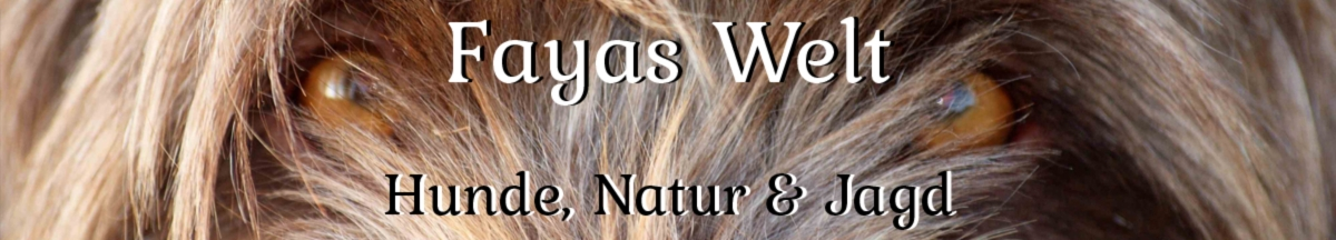 Showroom - Fayas-Welt
