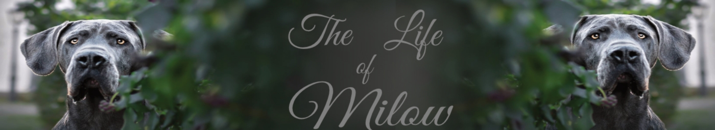 Showroom - The life of Milow