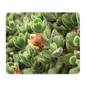 Blossom Pad - Mousepad (Querformat)