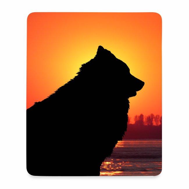 Eurasier im Sonnenuntergang am Meer