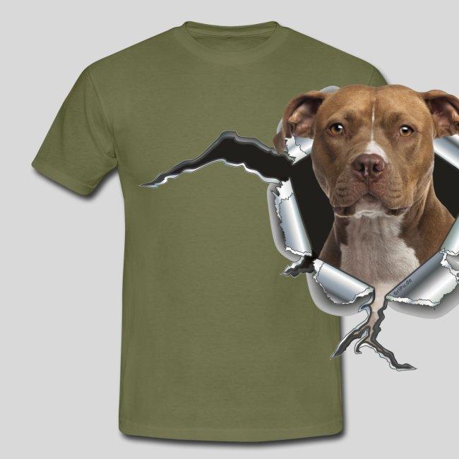 American Staffordshire Terrier *Metall-Loch*