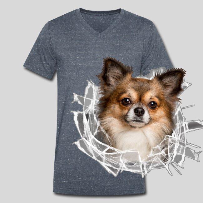 Chihuahua im *Glas-Loch*
