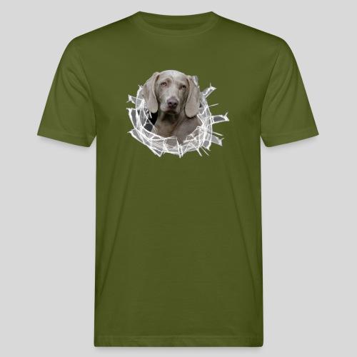 Weimaraner im *Glas-Loch* - Männer Bio-T-Shirt