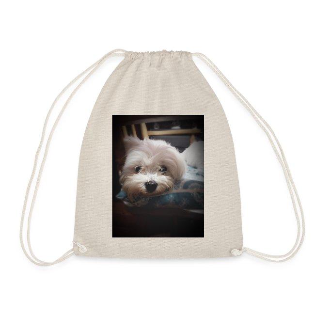 Pure White Pup
