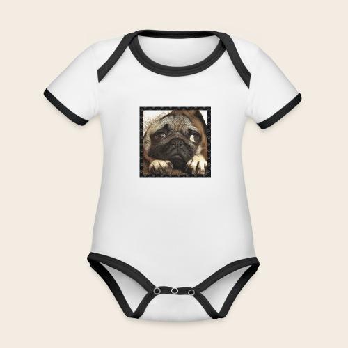 Mops Hund 1 - Baby Bio-Kurzarm-Kontrastbody