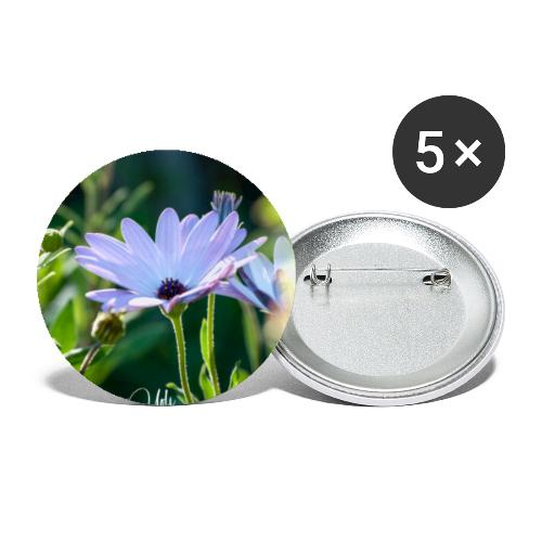 Dimorfoteca - Paquete de 5 chapas pequeñas (25 mm)