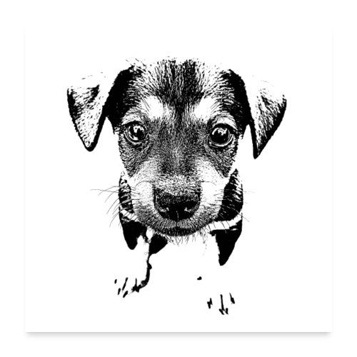 Hund Welpe Dog - Poster 60x60 cm