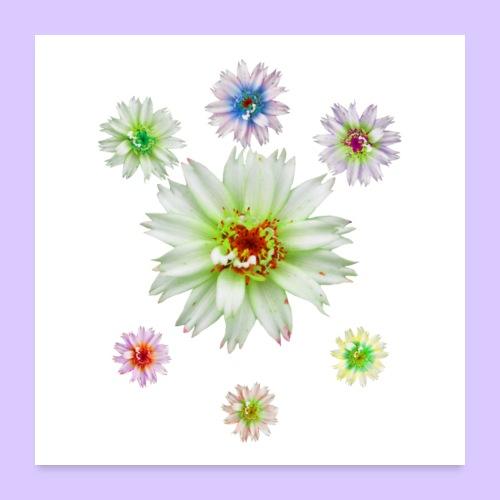 zauberhafte bunte Blumen, Blüten, Blume, Natur - Poster 60x60 cm