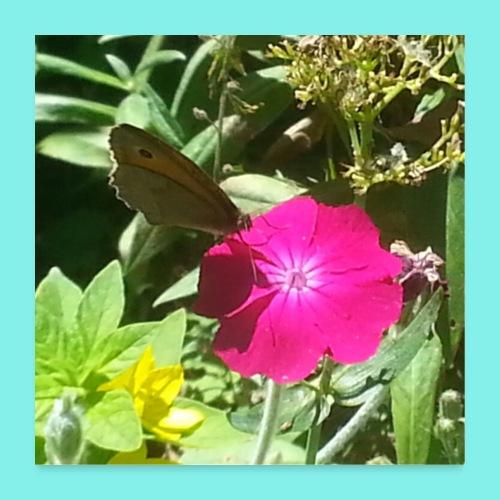 Schmetterling auf Blume - Poster 60x60 cm