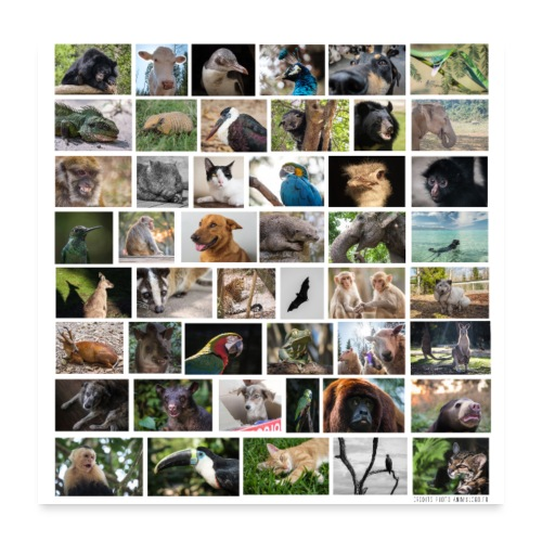Poster animaux - Poster 60 x 60 cm