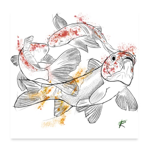 Carpa koi color - Poster 60x60 cm