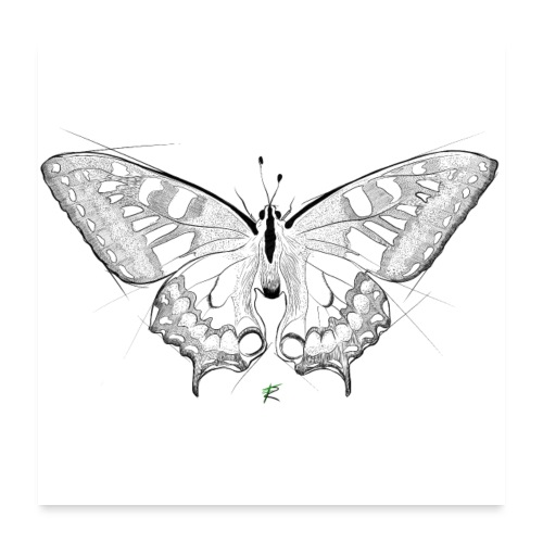 Butterfly - Poster 60x60 cm