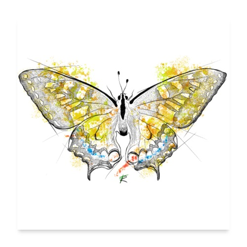 Butterfly color - Poster 60x60 cm