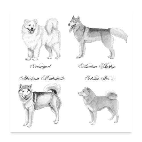 spitzdog poster - Poster 60x60 cm