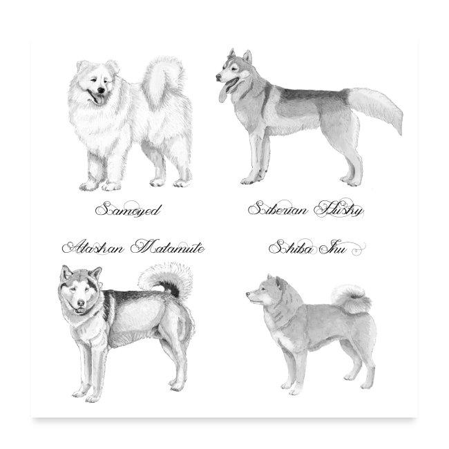spitzdog poster