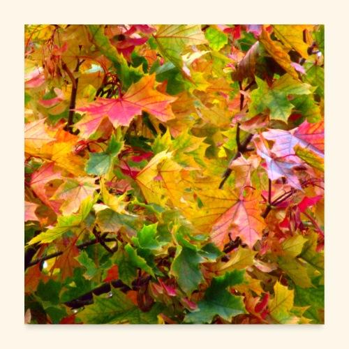 bunte Ahorn Blätter im Herbst an einem Laub Baum - Poster 60x60 cm