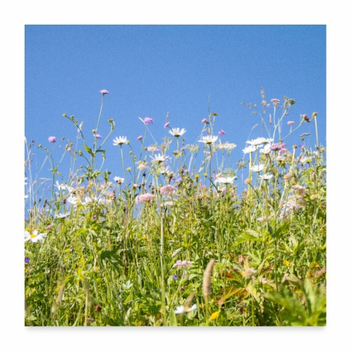Alpage en fleurs - Poster 60 x 60 cm