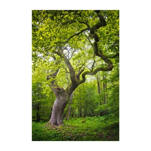 alter Baum - Poster 20x30 cm