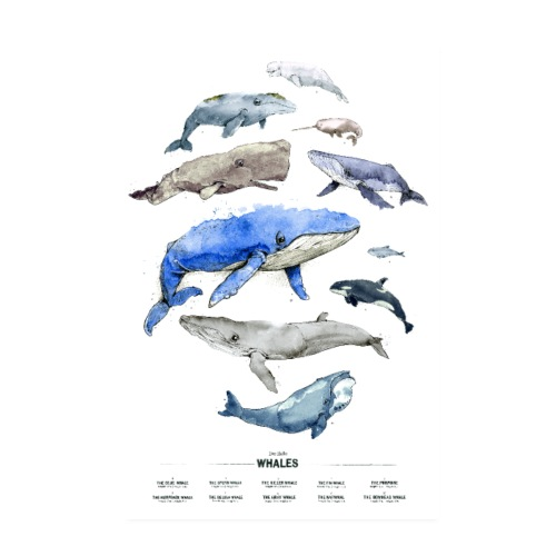 Wale (Whales) - Poster 20x30 cm