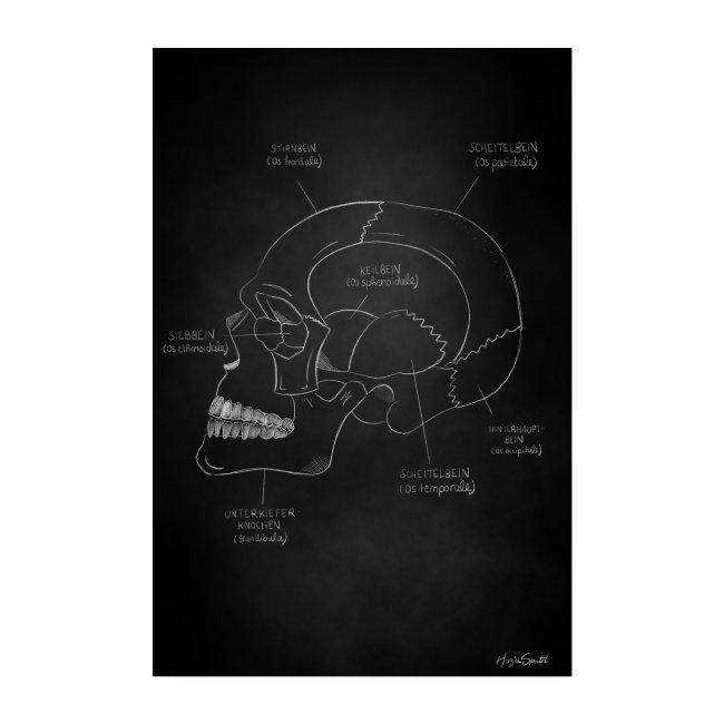 Anatomieposter Kreidezeichnung Schädelknochen