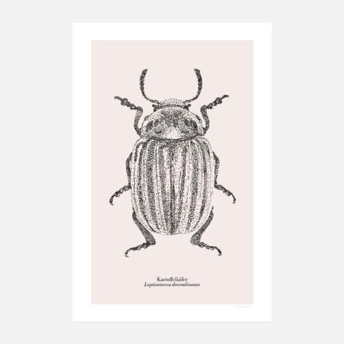 Kartoffelkäfer | Leptinotarsa decemlineata Poster - Poster 20x30 cm