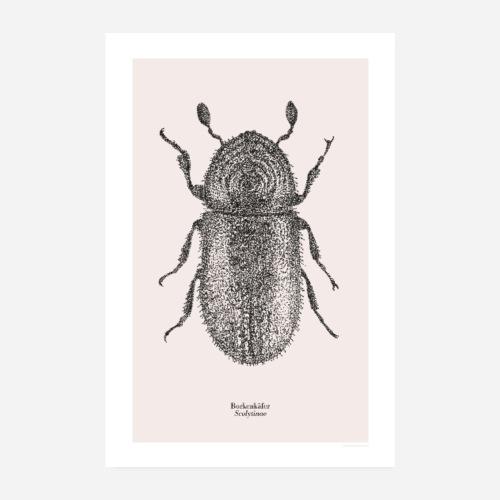 Borkenkäfer | Scolytinae Poster - Poster 20x30 cm