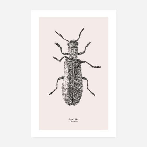 Buntkäfer | Cleridae Poster - Poster 20x30 cm