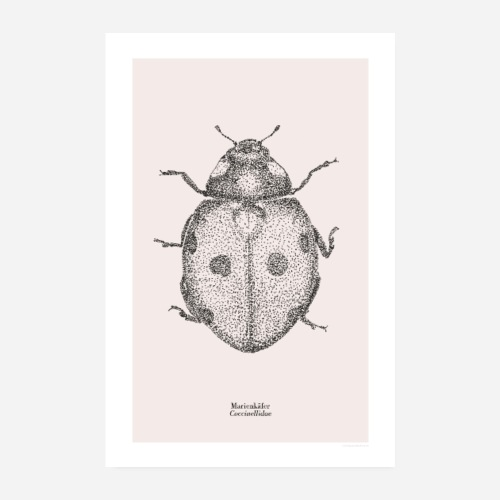 Marienkäfer | Coccinellidae Poster - Poster 20x30 cm