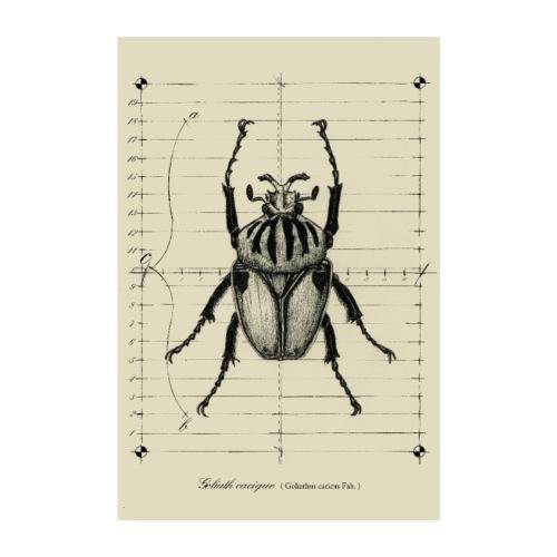 Poster scarabée goliathus - Poster 20 x 30 cm