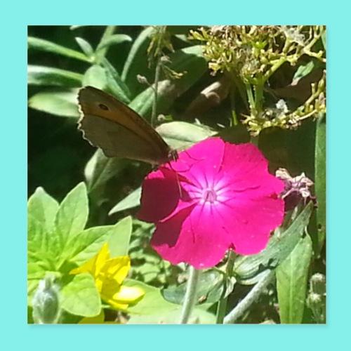 Schmetterling auf Blume - Poster 20x20 cm