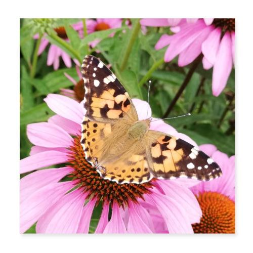 Sommerfugl med solhat - Poster 20x20 cm