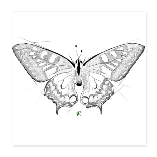 Butterfly - Poster 20x20 cm
