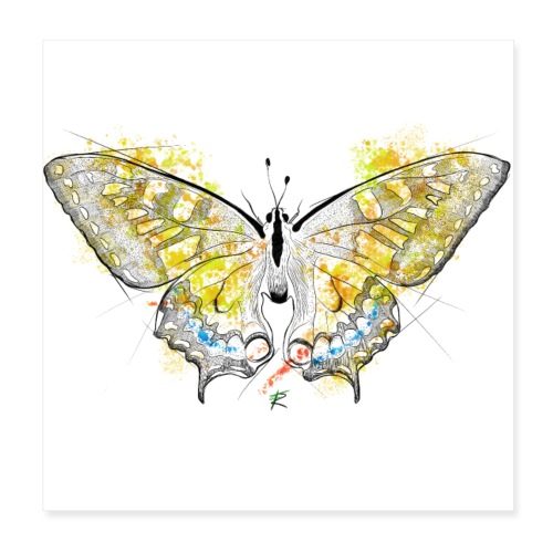 Butterfly color - Poster 20x20 cm