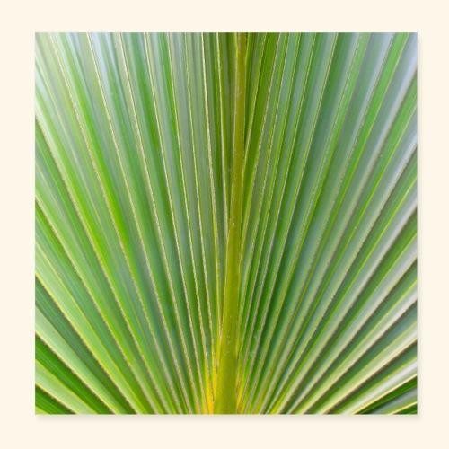 Blatt einer Palme auf einer Insel in der Karibik - Poster 20x20 cm