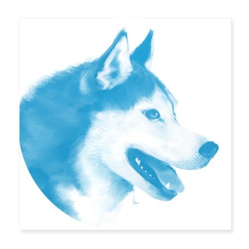 husky - 1001 nordiques - Poster 20 x 20 cm