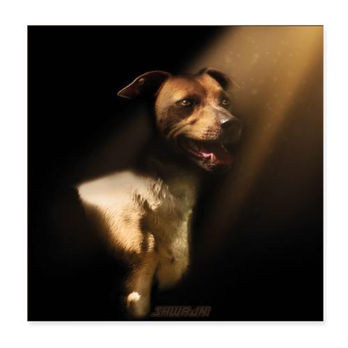 Jack, the Seeker of Light - Poster 20x20 cm