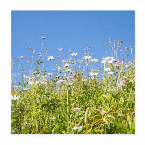Alpage en fleurs - Poster 20 x 20 cm