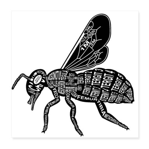 Skelett Biene - Poster 20x20 cm