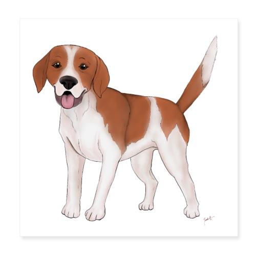 Beagle - Poster 20x20 cm