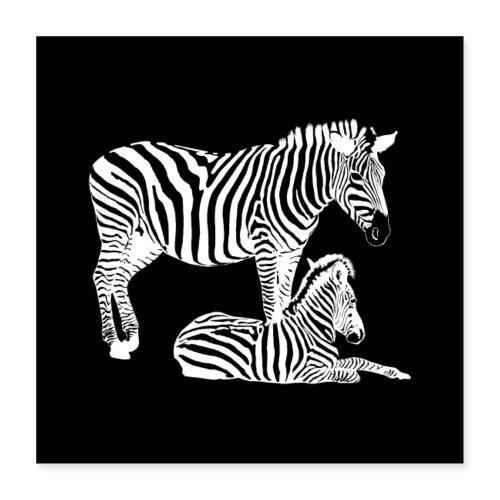 Safari - Zebra Stute mit Fohlen in schwarz weiß - Poster 40x40 cm
